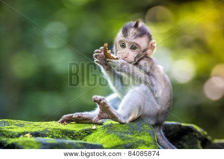 Little Baby-monkey