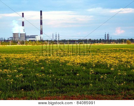 Plant and green field