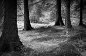 picture of edging  - Black and white infrared effect image of a forest edge in the heart of the Peak District, Derbyshire, United Kingdom ** Note: Soft Focus at 100%, best at smaller sizes - JPG