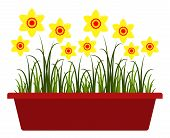 image of planters  - vector daffodils in planter isolated on white background - JPG