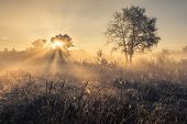 pic of mystical  - Beautiful mystical landscape in yellow orange and red colors at sunrise - JPG