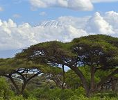 foto of kilimanjaro  - Snow on top of Mount Kilimanjaro in Amboseli - JPG