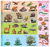 foto of omnivore  - Vector illustration of forest animals compared to diet - JPG