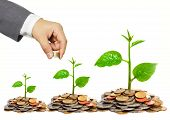 pic of golden coin  - Hand of a businessman giving coins to a tree growing on golden coins - JPG