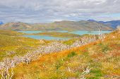 stock photo of pain-tree  - Lake of Torres del Paine National park - JPG
