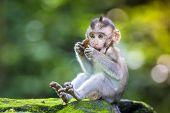stock photo of baby-monkey  - Little baby - JPG