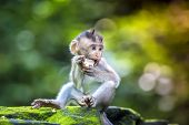 stock photo of monkeys  - Little baby - JPG