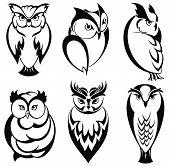 foto of owl eyes  - Bird icons - JPG