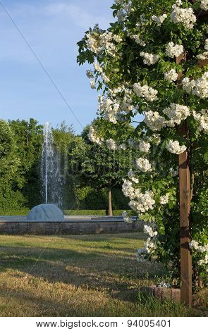 Rose arbor and fountain