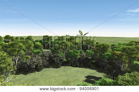 Beautiful Green Forest For Ecology Concept