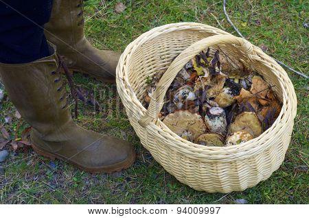 mushroom basket in Pineta Valley, Pyrenees, Huesca, Aragon, Spain
