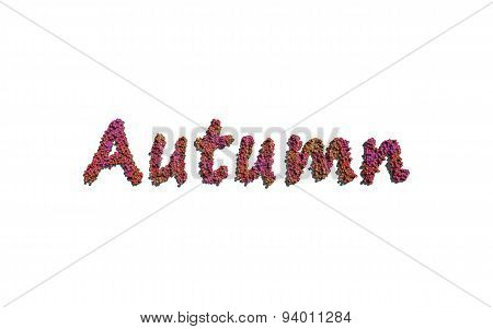 Autumn Text Flower With White Background