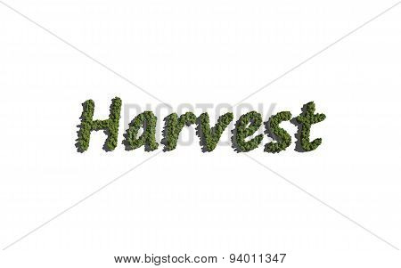 Harvest Text Tree With White Background