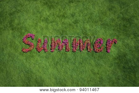 Summer Text Flower With Grass Background