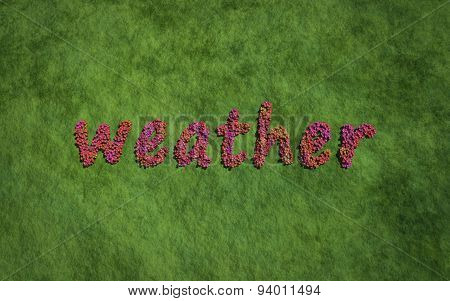 Weather Text Flower With Grass Background