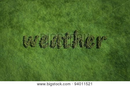 Weather Text Tree With Grass Background