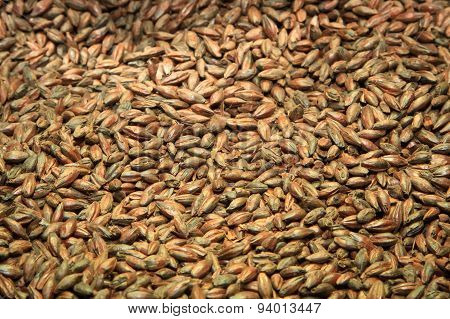 Malt background. Ingredient for beer.
