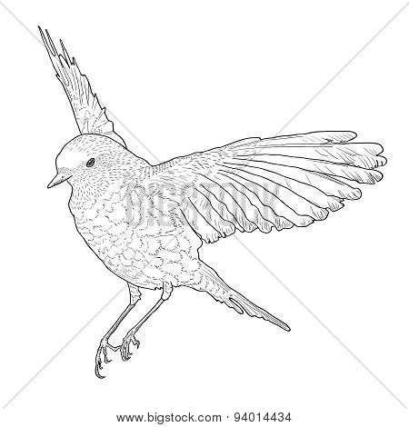 Soaring Bird With Spread Wings. Hand Drawn Vector Illustration.