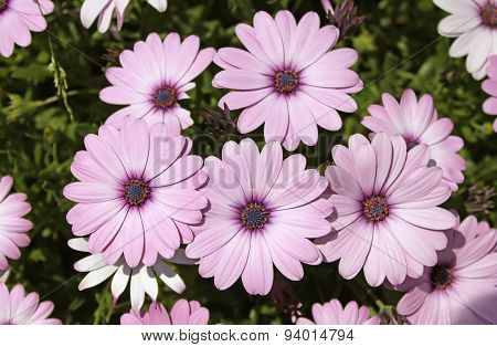 Pretty Pink Flowers In A Garden