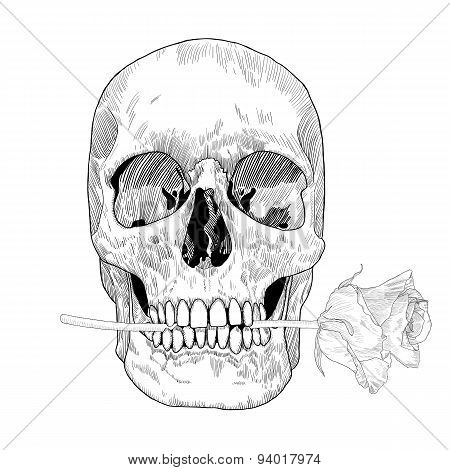 Vintage Greeting Card With Hand Drawn Skull Holding a Rose in his Mouth.