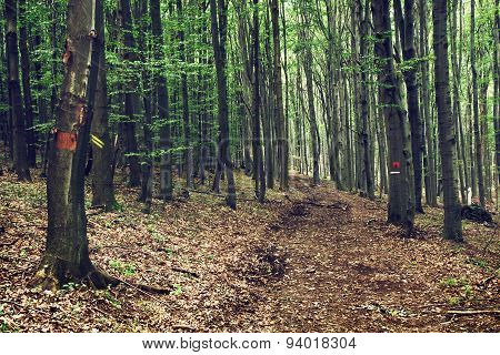 European Deciduous Forest