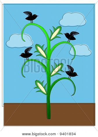 Crows sitting on cornstalk abstract offset coloring