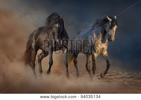 Two stallion with long mane passage in desert
