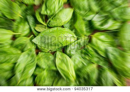 Fresh basil - blurred style photo