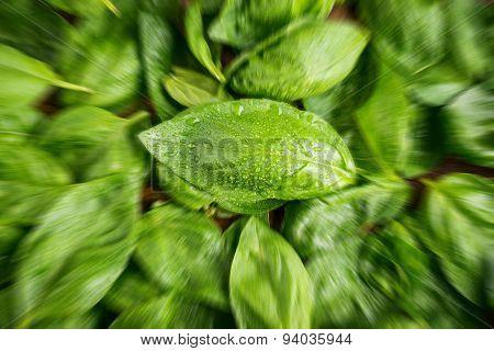 Fresh basil leaves - blurred style photo