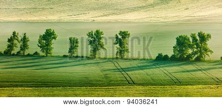 Panorama of \Moravian rolling landscape with trees in early morning haze. Moravia, Czech Republic