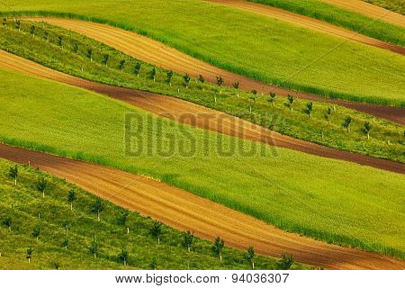 Striped fields of South Moravia in summer, Czech Republic