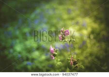 Purple flower in bluebells pastel