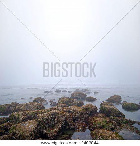 Foggy White Sea Rocks