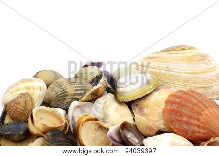 A Pile Of Colorful Seashells