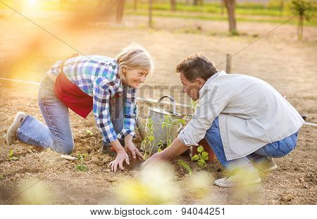 Senior couple planting seedlings