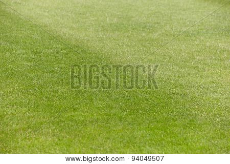 Football And Rugby Green Field With Freshly Cut Grass Detail