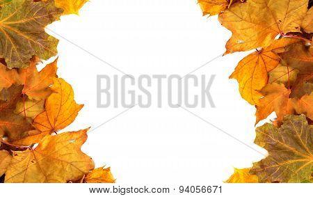 Autumn Maple-leafs