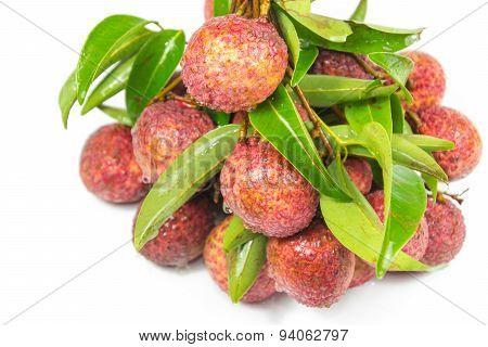 Lychee - Chakrapad Species