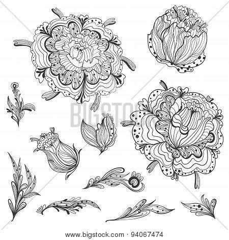 Sketch Floral Design Elements