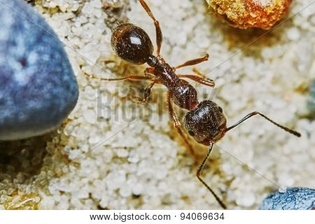 Ant outside in the garden