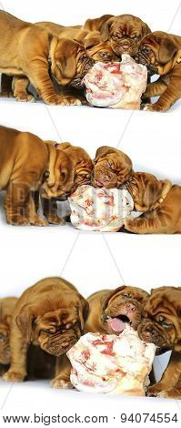 Dogue de Bordeaux puppy and a large bone, raw meat