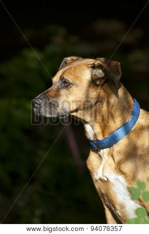 Sitting Dog in Forest