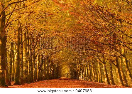Autumn Lane in a forest
