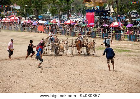 Ox Cart Racing In Thailand.