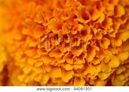 Colorful Orange Flower