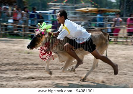 Racing Took The Bull With His Bare Handsart In Thailand.