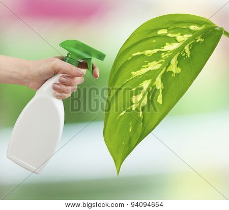 Female hand with sprayer and big green leaf on light natural background