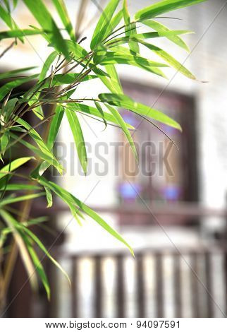 beautiful green bamboo leaves in Chinese garden