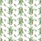 stock photo of eucalyptus leaves  - Vector seamless pattern with eucalyptus leaves and pods - JPG