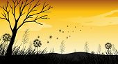 pic of dry grass  - Silhouette field with grass and dry tree - JPG